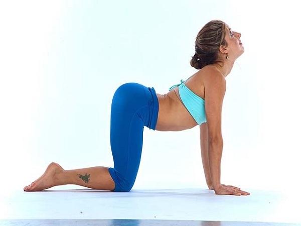 Bài tập yoga tư thế mèo
